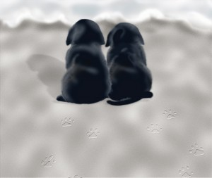 Two black Labrador Retriever puppies sitting on beach, rear view